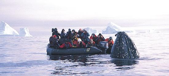 Hump Back Whale estudios Fotógrafos