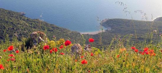Amapolas, Islas Kornati