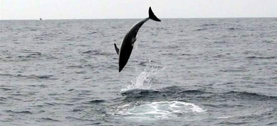 Delfínes de alto vuelo