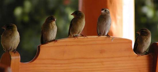 Reserva de aves, Seychelles