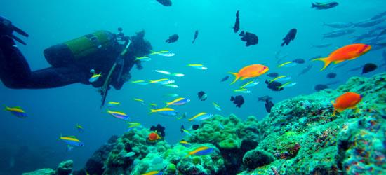 Vida multicolor de arrecife