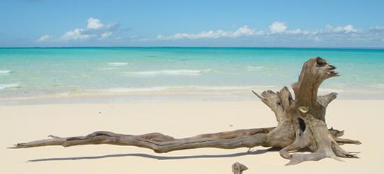 Driftwood, Mozambique