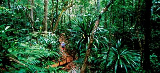 Selva del Monte Kogji