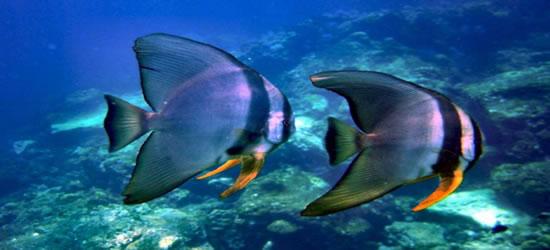 Vida marina verdaderamente espectacular