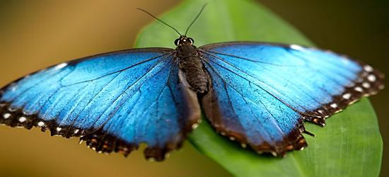 Granja de mariposas, St Martin