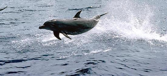 Juguetón delfín nariz de botella