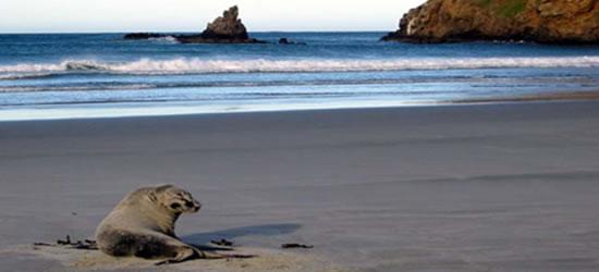 Amistoso león marino