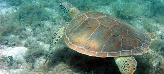 Vida marina de las Islas Vírgenes de EUA