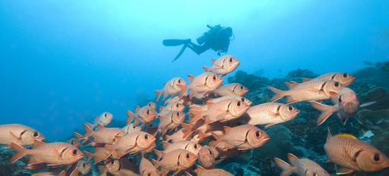 Red Fish, Micronesia