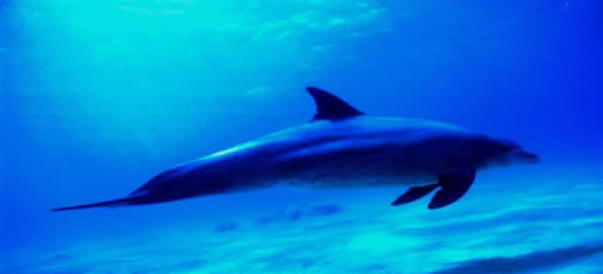 Un delfín local