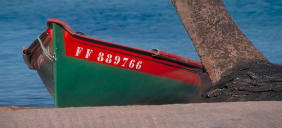 Colorido detalle del Caribe