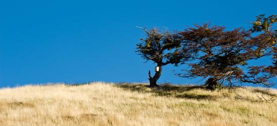 Patagonia Otoño, Tierra del Fuego