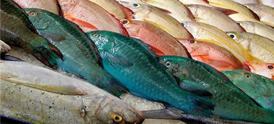 El mercado de pescado, Tahití
