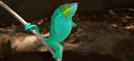 Imágenes de Madagascar