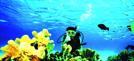 La barrera de coral