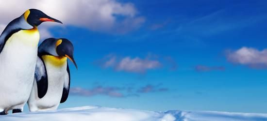 Pingüino de la Antártida