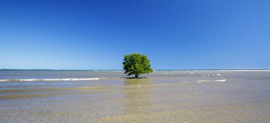 Árbol de manglar, Nosy Be